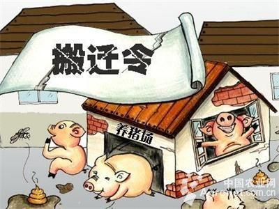 """安徽养殖场拆迁案:""""命运多舛""""的养鸡场"""