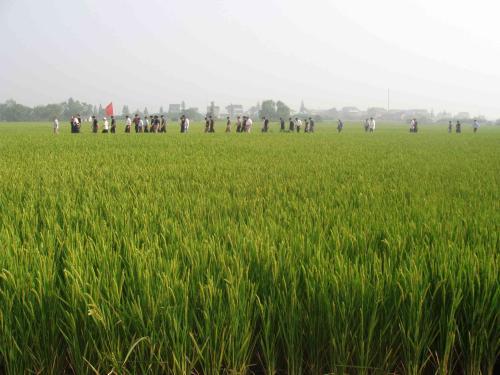 圣运胜诉通告:数千村民集体复议,胜广西南宁国土资源局